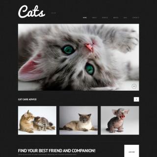 Làm website thú cưng 18